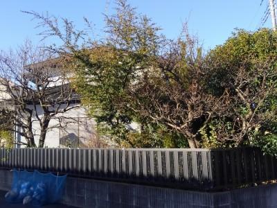 BEFORE : 『庭木伐採、草刈り 茨城県取手市』の施工前